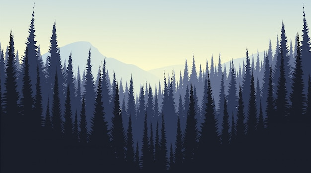 Berglandschap met dennenbos, mistig en mist.