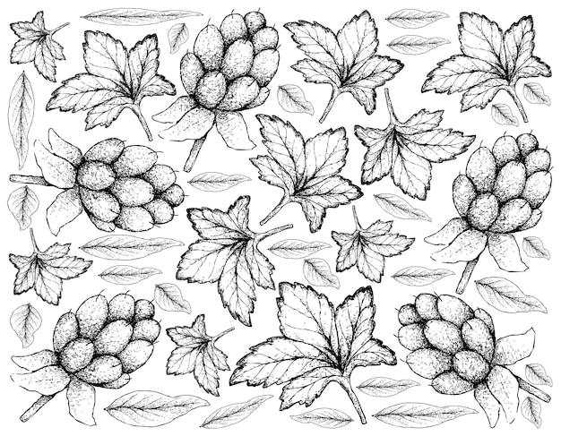 Berry fruits illustration wallpaper van hand getrokken schets