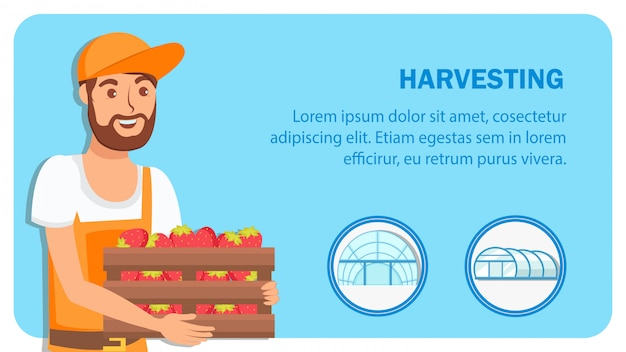 Berry harvesting web banner flat vector template