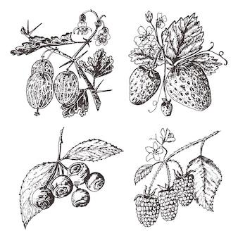 Bessen instellen. framboos, bosbes, aardbei, kruisbes. gegraveerde hand getrokken in oude schets, vintage stijl. vakantie decorelementen. vegetarische fruit plantkunde.