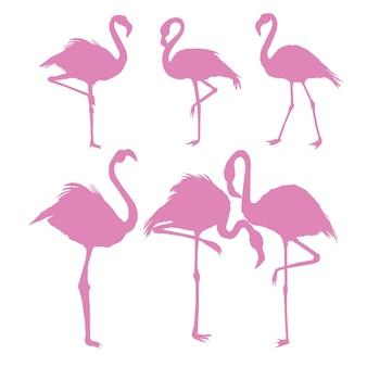 Bestand van flamingo