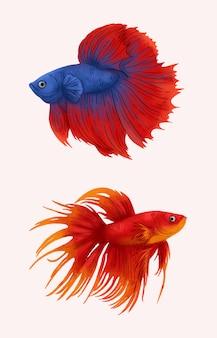 Betta vis illustratie. rode en blauwe bètavissen.