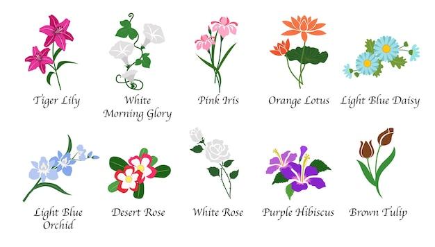 Biologische natuur botanische tuin bloem geïsoleerde collectie