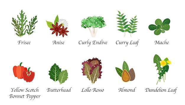 Biologische natuur gezondheid plantaardige voedsel kruiden geïsoleerde collectie