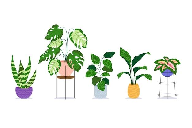 Biologische platte kamerplantcollectie