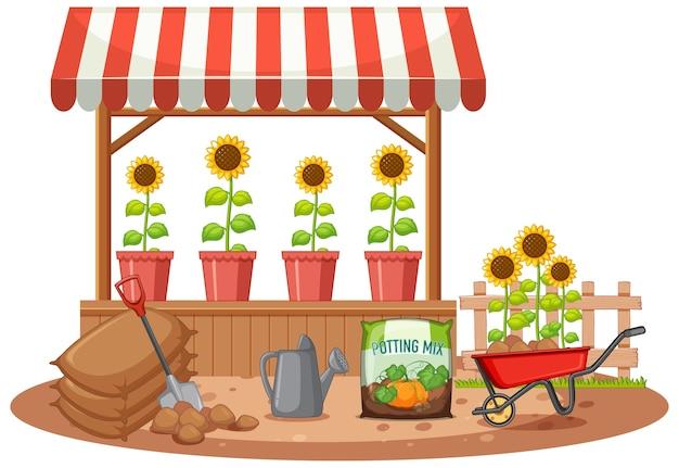 Biologische zonnebloem in de winkel