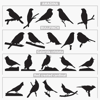 Birds breeds silhouettes