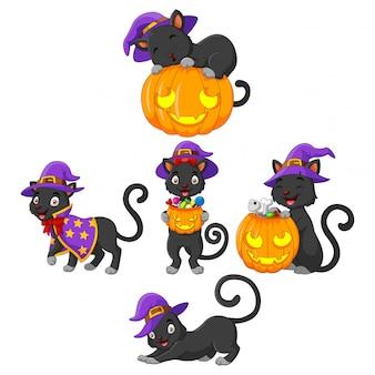 Black cat-collectie met pompoen