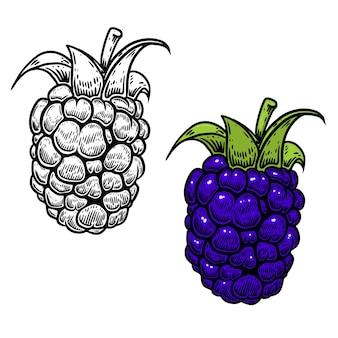 Blackberry-illustratie in gravurestijl op witte achtergrond. ontwerpelement voor logo, etiket, embleem, teken, nemu, flyer, poster.