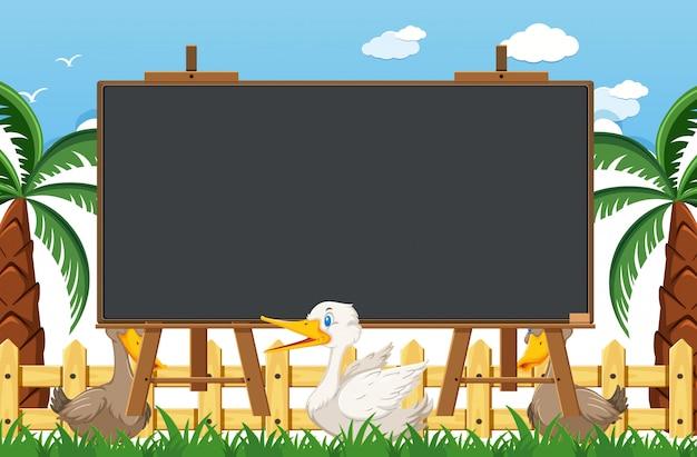 Blackboard-sjabloon met eenden in het park
