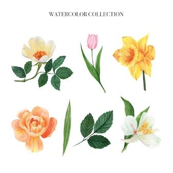 Bladeren en bloemen aquarel elementen instellen handgeschilderde weelderige bloemen, illustratie van bloem.