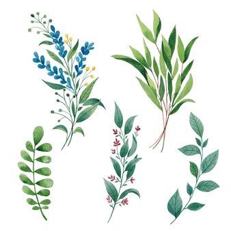 Bladeren en takken aquarel set