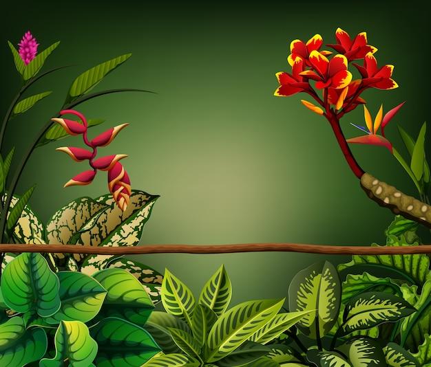 Bladeren eromheen en tak