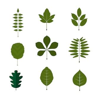 Bladsymbool en pictogramreeks. witte achtergrond blad
