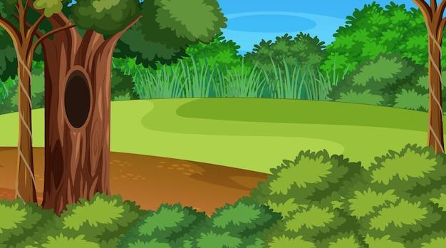 Blanco bosscène met verschillende bosbomen Premium Vector