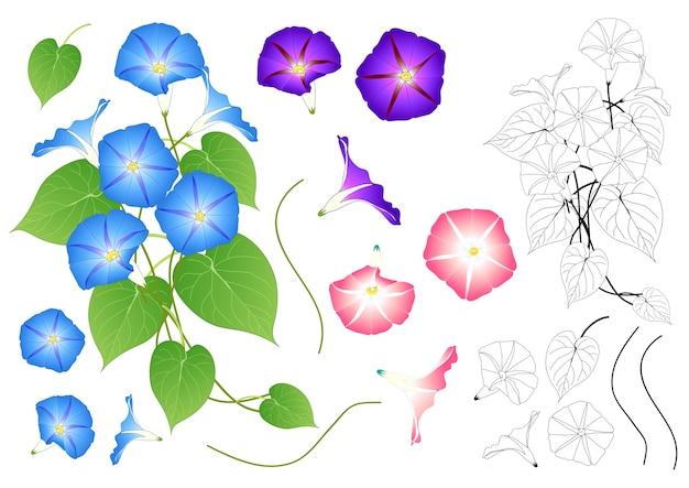 Blauw roze en paars morning glory overzicht
