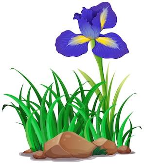 Blauwe bloem in de tuin