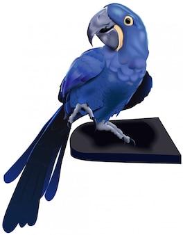 Blauwe hyacintara papegaai