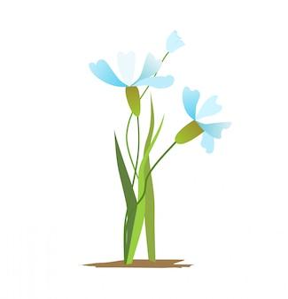 Blauwe lentebloemen