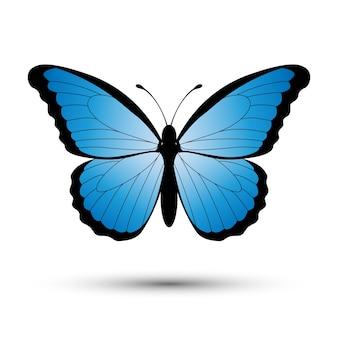 Blauwe vlinder geïsoleerd op een witte achtergrond.