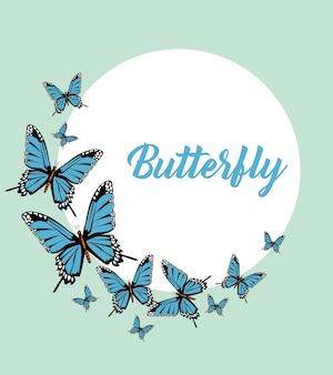 Blauwe vlinders belettering circulaire frame