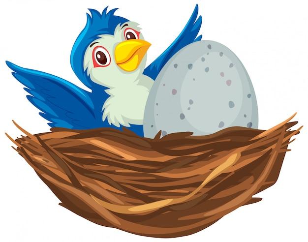 Blauwe vogel op het nest
