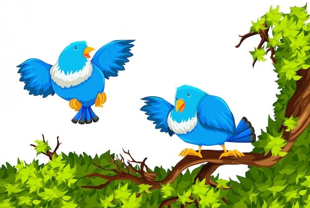 Blauwe vogels op de tak