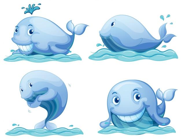 Blauwe walvissen