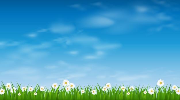 Blauwe zonnige hemel en groene grasgrens