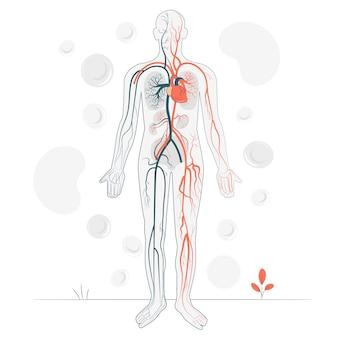 Bloedsomloop concept illustratie
