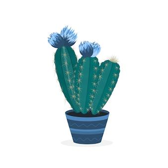Bloeiende cactussen. bloeiende cactus in een pot. ingemaakte huisplant