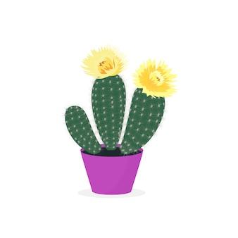Bloeiende cactussen. cactus in een pot. ingemaakte huisplant