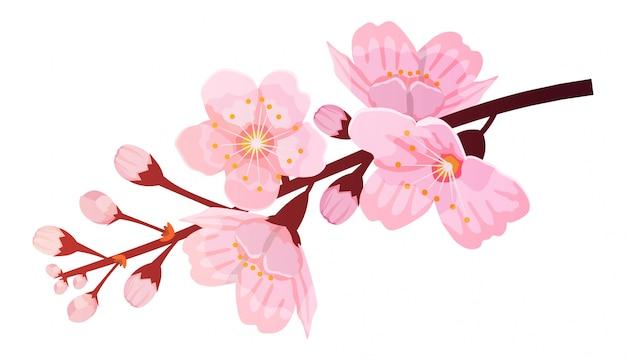 Bloeiende kersentak, botanische illustratie. sakura bloem.