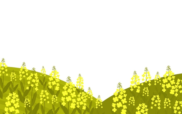 Bloeiende koolzaad. koolzaad groeit in een weiland.