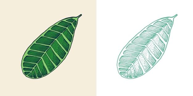 Bloeiende planten tropische of exotische bladeren en blad palmplant monstera vintage varen gegraveerd
