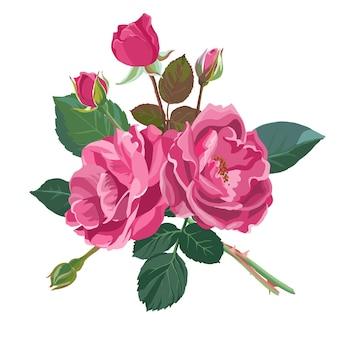 Bloeiende rozen en pioenrozen, geïsoleerde bloemen in bloei. bloeiende bloemist samenstelling met bladeren en knoppen. gebladerte en botanische decoratie voor kaarten of cadeaus. vector in vlakke stijl