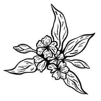 Bloem en bladeren tak. hand getekend vectorillustratie. zwart-wit zwart-witte inktschets.