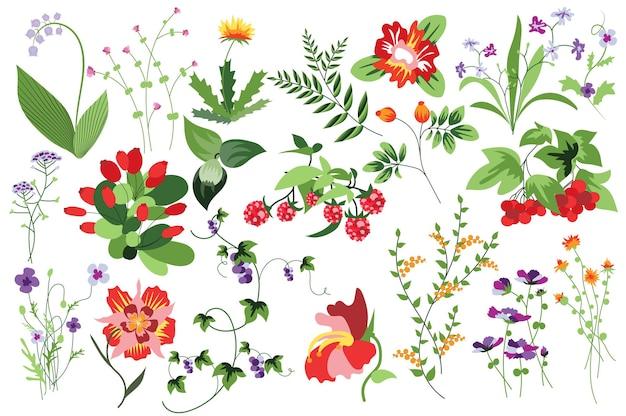 Bloem en planten geïsoleerde set frambozenlijsterbes en andere bessen bloeiende tuin en bloeiend