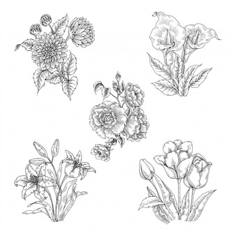 Bloem illustratie set