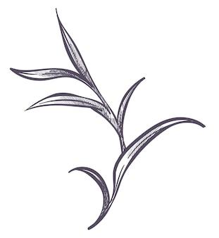Bloem met bladeren, minimalistische flora met lang blad