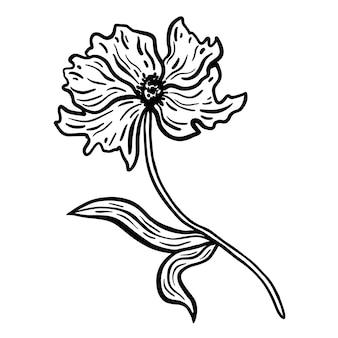 Bloem met stengel en bladeren. hand getekend vectorillustratie. zwart-wit zwart-witte inktschets.