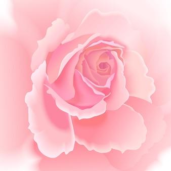 Bloem roos achtergrond.