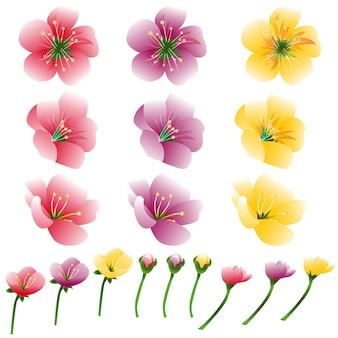 Bloemblaadje heldere bloem ingesteld