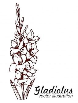 Bloemen bloeiende gladiolen hand getrokken schets.