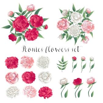 Bloemen en bladeren. roze en witte pioenrozen. bloemen set.