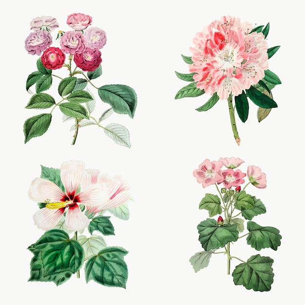 Bloemen hand drvector vintage botanische set