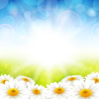 Bloemen op de zomer achtergrond