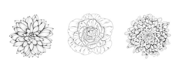 Bloemen van roos, chrysant, dahlia.