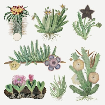 Bloemen vector vintage natuur illustratie, geremixt van de kunstwerken van robert jacob gordon