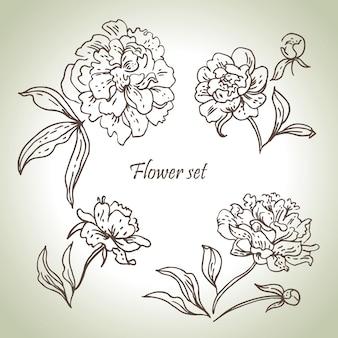 Bloemenreeks. handgetekende illustraties van pioenrozen
